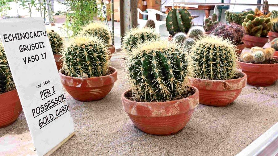 Piante Grasse & Cactus